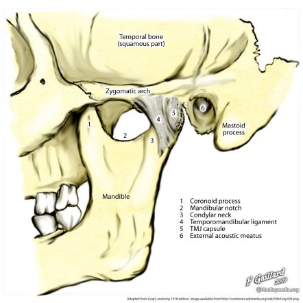 Temporomandibular Joint Radiology Reference Article