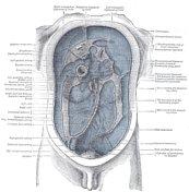 Peritoneal cavity...
