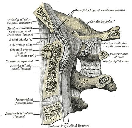 Artrita articulației occipitale. Artrita articulației occipitale