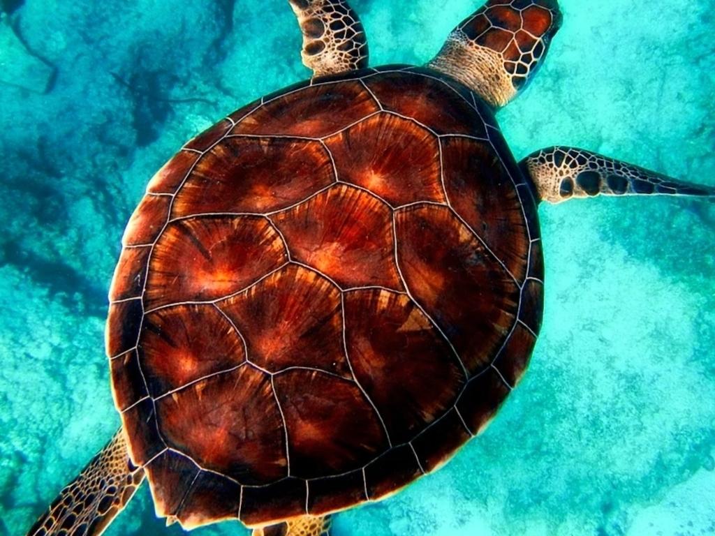 Turtleback Sign Photo Radiology Case Radiopaedia Org